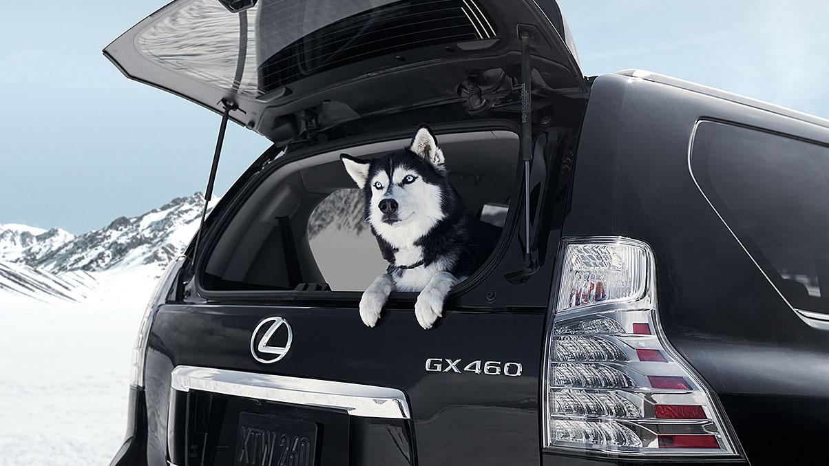 Adventure-Ready 2019 GX 460